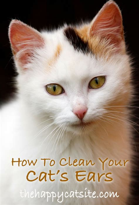 cat ears clean cats step safely ear cleaning tabby guide kittens safe funny naturally deep facts faces fris