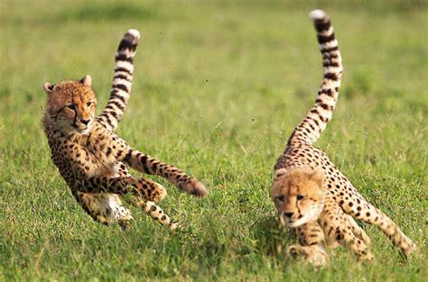 kruger park jannie otto safaris