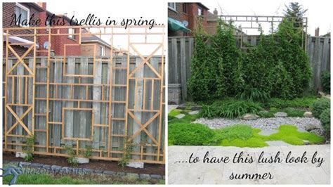 Outdoor Privacy Trellis by Build A Trellis And Privacy Screen Hometalk