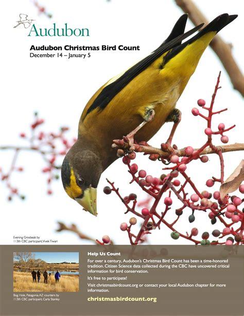gulf shores christmas bird countbirmingham audubon