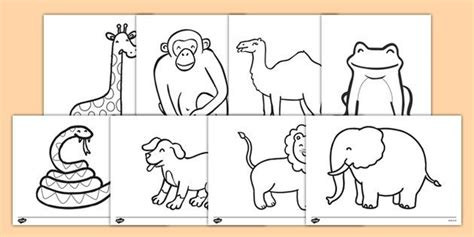 Dear Zoo Colouring Sheets …