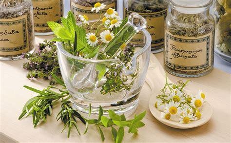 ag es de cuisine le top 5 des plantes médicinales pour soigner nos enfants