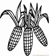 Corn Coloring Pages Thanksgiving Stalk Cob Clipart Drawing Printable Outline Clip Sheets Cornstalk Colouring Pdf Holidays Candy Coloringpages101 Clipartmag Getdrawings sketch template