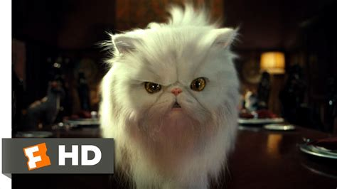 cats dogs   clip  tinkles  hd