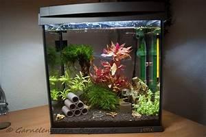 Was Kann Man In Ein Gewächshaus Pflanzen : bersicht led beleuchtung f r nano aquarien ~ Lizthompson.info Haus und Dekorationen