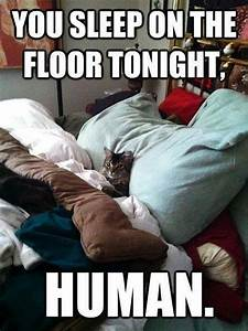 Animal Memes - You sleep on floor - Funny Memes