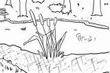Pond Coloring Habitat Designlooter Perfect Kerra sketch template