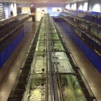 Aquascape Fish Imports by Aquascape Fish Imports Ltd Sutton Coldfield Aquarium