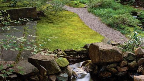 growing moss lawn planting a moss lawn southern living