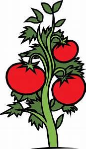 Tomato Plant Clip Art at Clker.com - vector clip art ...