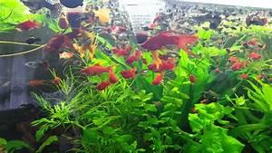 Aquarium Pflanzen Schnellwachsend : aquarium pflanzen youtube ~ Frokenaadalensverden.com Haus und Dekorationen