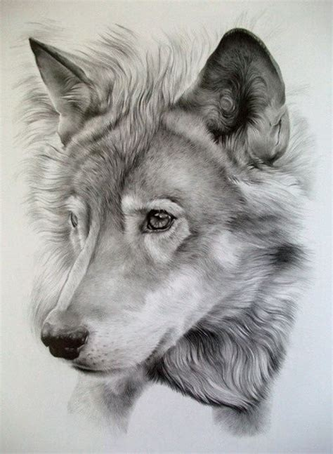 beautiful wolf drawing pencil art sketch animal http