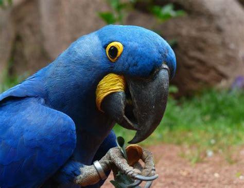 top 5 de grands perroquets les plus populaires