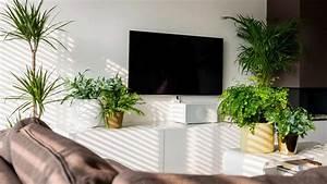 Plante Verte D Appartement : plantes d 39 appartement dcm ~ Premium-room.com Idées de Décoration