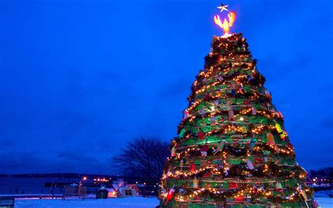 maine xmas lobster the weirdest trees in the world travel leisure