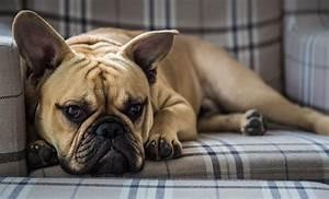 Hundebekleidung Französische Bulldogge : hunde dna test was steckt in meinem hund nenalisi danielas mami familien blog ~ Frokenaadalensverden.com Haus und Dekorationen