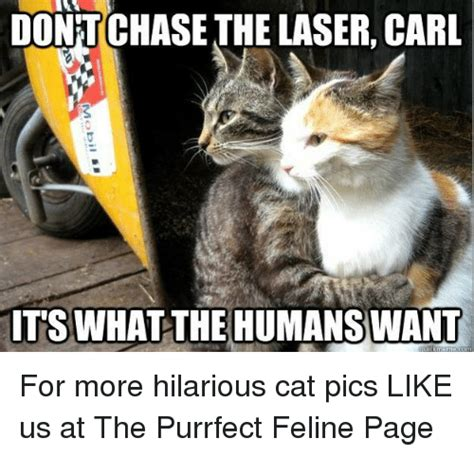 dontchasethe laser carl    humans
