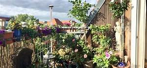 Rosen Für Balkon : rosen im topf 5 wichtige pflegetipps willkommen in ~ Michelbontemps.com Haus und Dekorationen