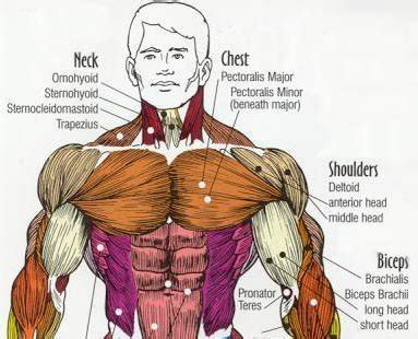 Many muscles are named for bones (e.g. Armor Plated Pecs!