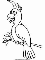 Pappagalli Papagei Cacatua Ausmalbilder Papageien Loros Stampare Pirates Gabbiani Navio Coloringpages101 Malvorlage Disegnidacoloraregratis Zeichenvorlage álbuns Recomendadas sketch template