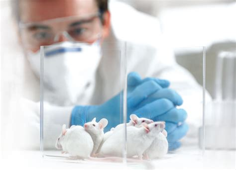 la experimentacion  animales es tan  como inutil