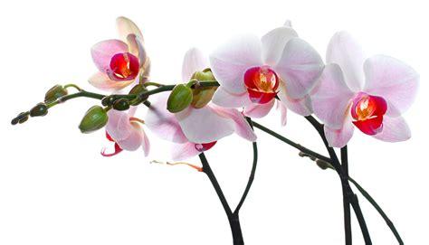 cuisines moins cher stickers fleur orchide achetez vos stickers moins cher