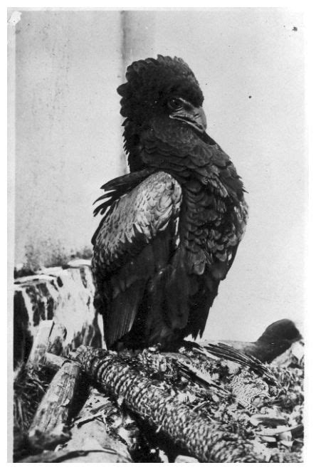 Fotografie Eritrea anni 1930/194