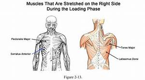 Baseball Player Rotation Chart How To Swing A Baseball Bat Backward Rotation Of Spine