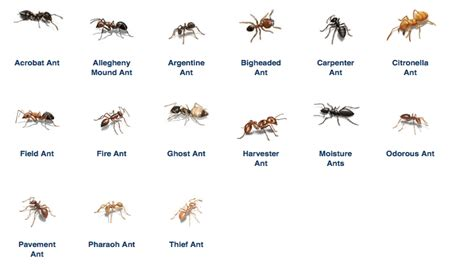 ants in kitchen ant removal best defense pest control hartford connecticut