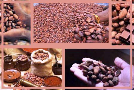 pabrik distributor coklat  indonesia