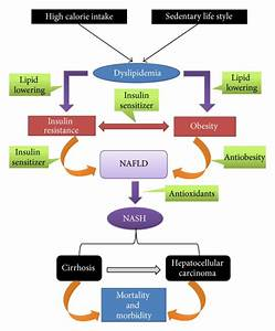 An Overview Of The Pathogenesis Of Nonalcoholic Fatty Liver Disease