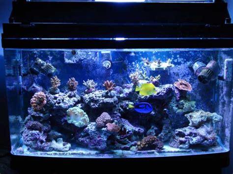 salt water fish tank member spotlight agsansoo