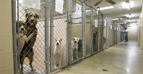 This Is Why You Should Adopt A Dog From A Shelter