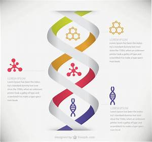 DNA medical infographic Vector   Free Download