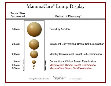 Deluxe Mammacare Lump Display Mammacare Foundation