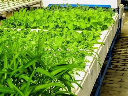 Hydroponic Gardening Garden Vegetables Plants Indoor Agriculture
