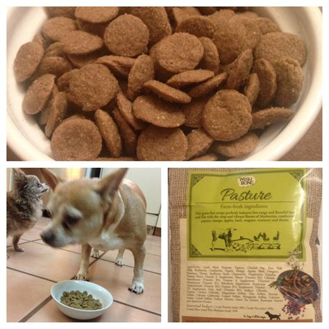 addict cuisine my wonderful experience with addiction pet food