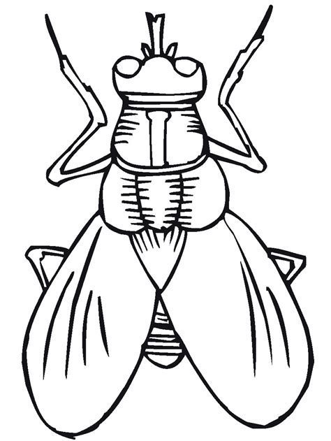 insects coloring pages getcoloringpagescom