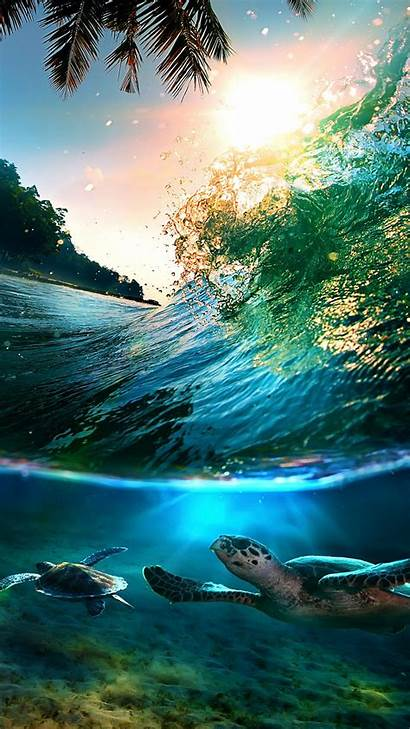 Sea Turtle Turtles Backgrounds Wallpapers Tropical Abstract
