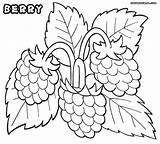 Coloring Berry Pages Raspberries Designlooter 902px 45kb 1000 sketch template