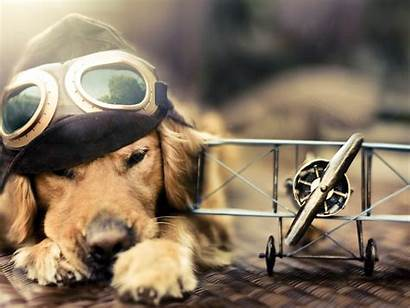 Funny Dog Aviator Desktop Animal Wallpapers Dogs