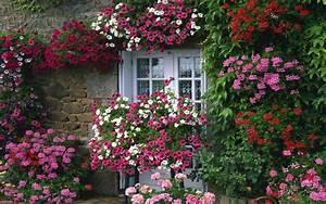 Beautiful, Flower, Gardens, , Beautiful, Flower, French ...