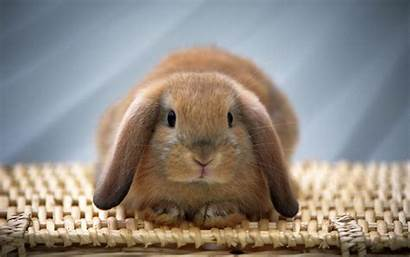 Rabbits Resolution Rabbit Funny Wallpapers