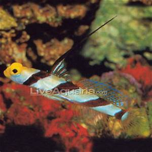 Fish patibility Marine Aquariums South Africa