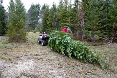 dana freeman travels choose and cut vermont christmas tree