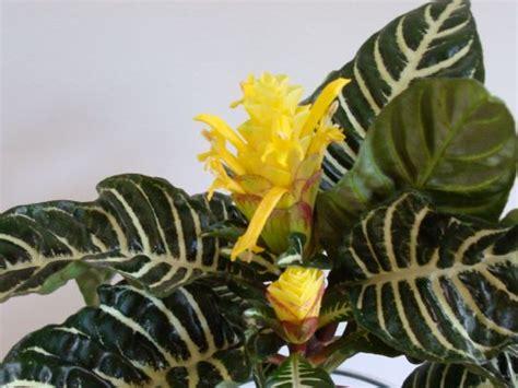 piante da interno con poca luce piante da appartamento con poca luce 5 idee per la scelta