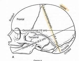 Mbbs Medicine  Humanity First   Fetal Skull