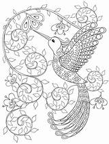 Coloring Hummingbird Adult Behance sketch template