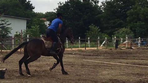horse riding bangalore