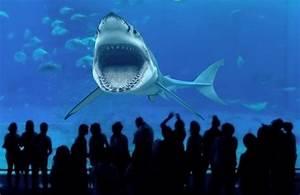 Warum der Weiße Hai in keinem Zoo der Welt existiert YouTube